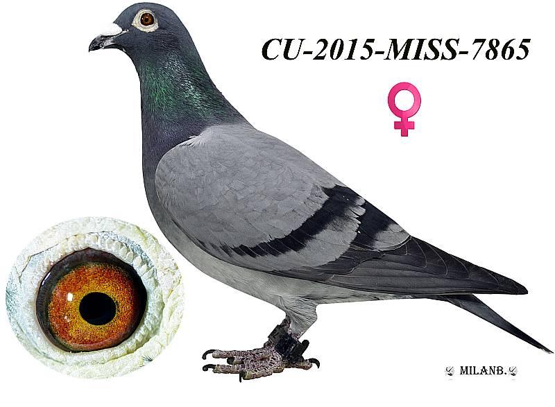 CU-2015-MISS-7865 - Blahovský Milan +Dávid