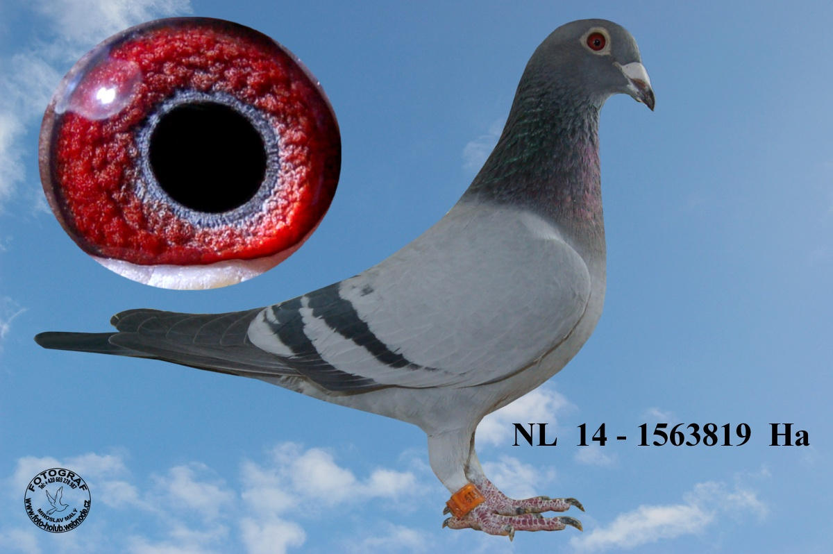 NL-2014-1563819 - Žilka Adrián