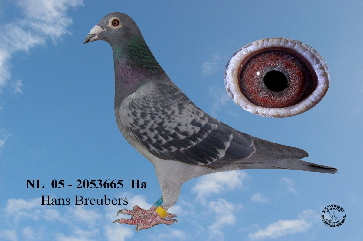 NL-2005-2053665 - Žilka Adrián