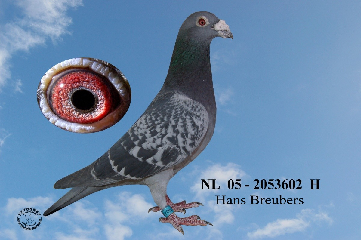 NL-2005-2053602 - Žilka Adrián