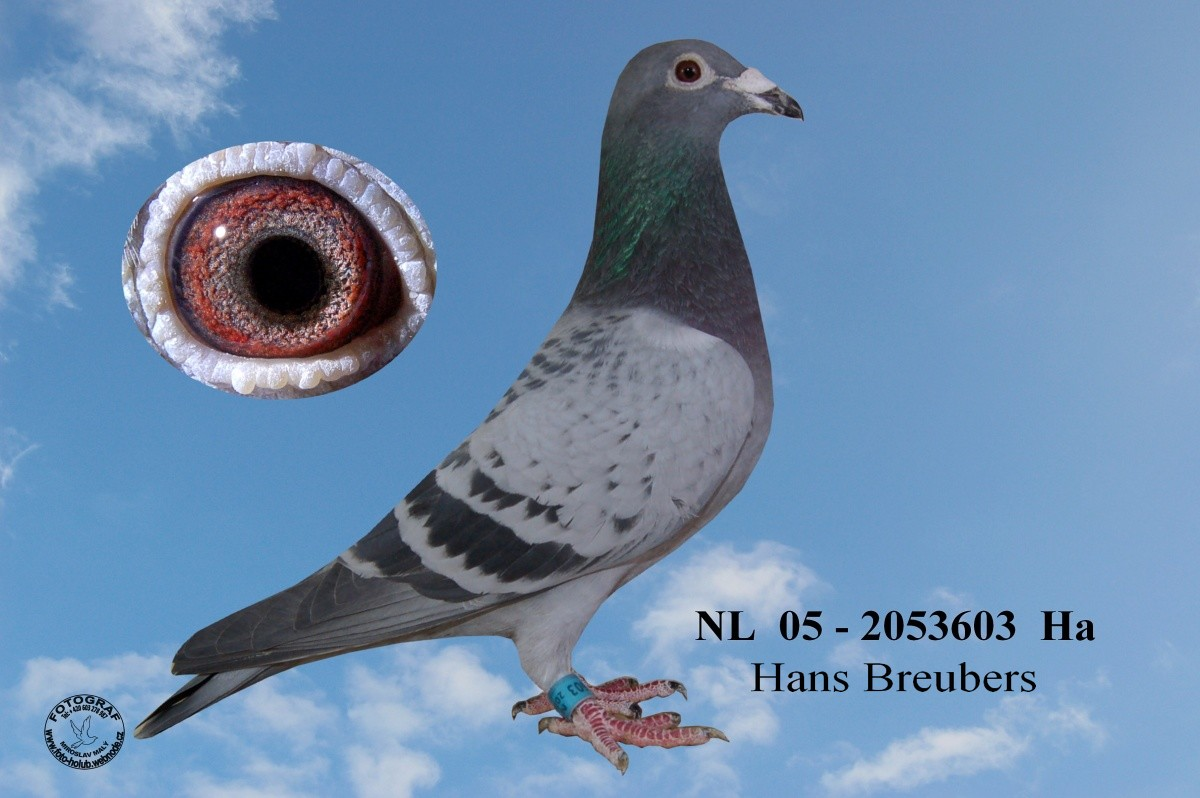 NL-2005-2053603 - Žilka Adrián