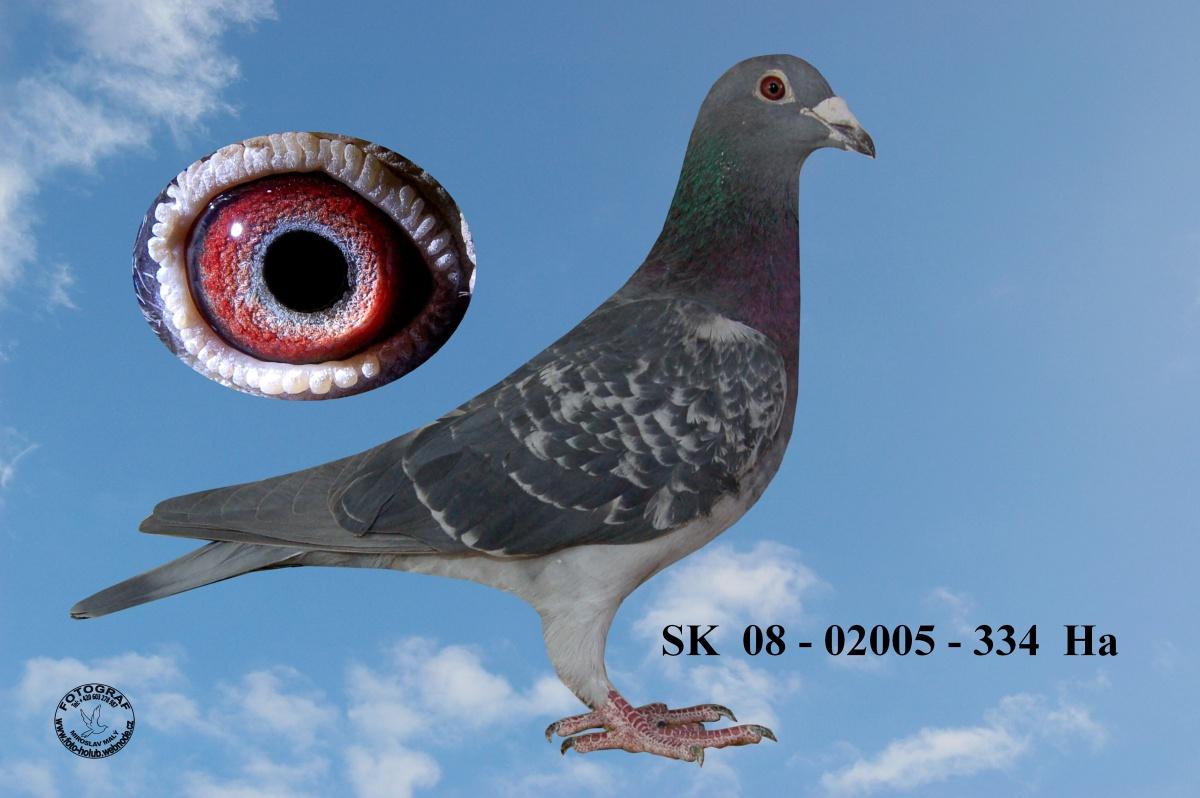 SK-2008-02005-334 - Žilka Adrián