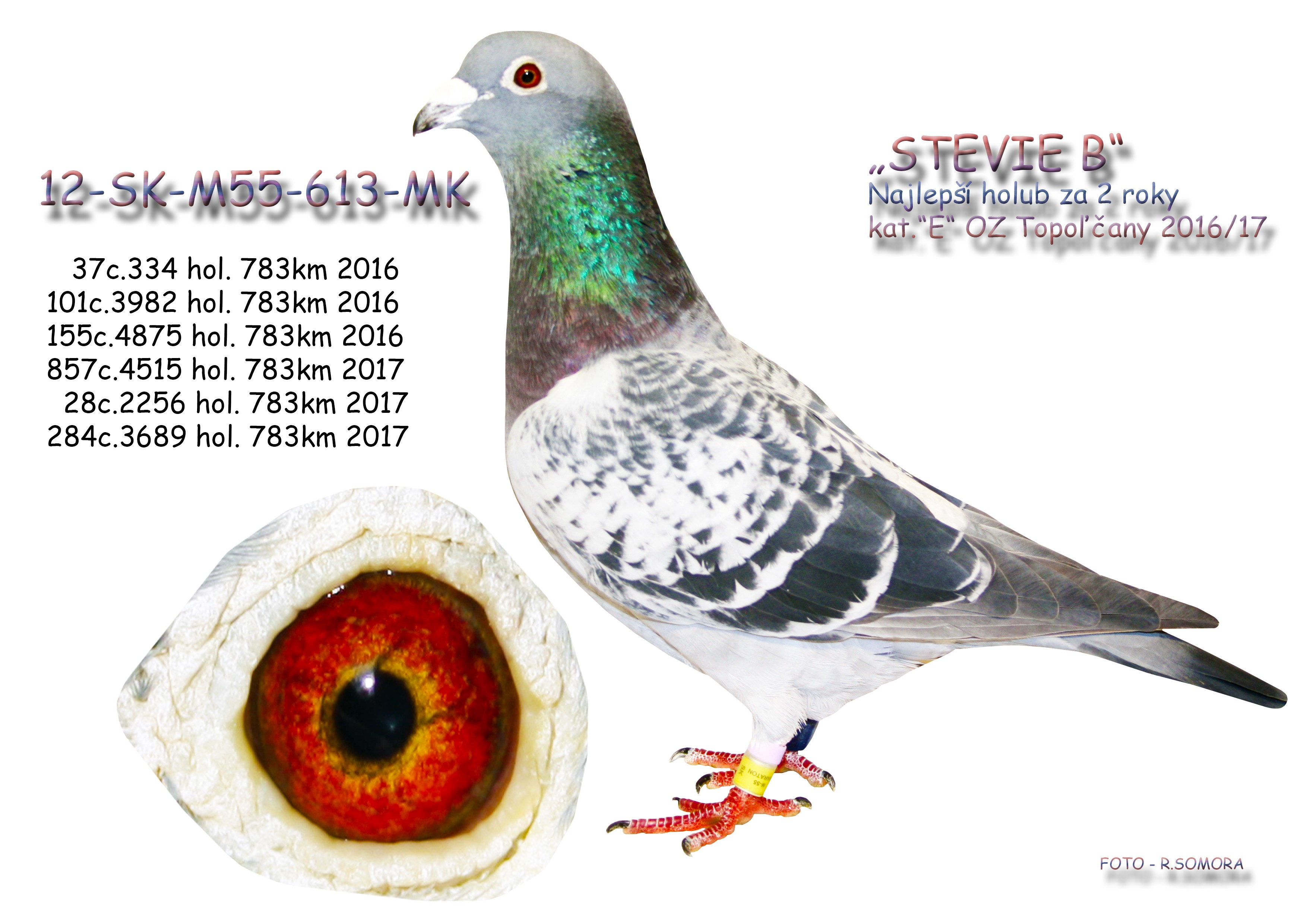 SK-2012-M-55-613 - Somora Jozef+Rudolf