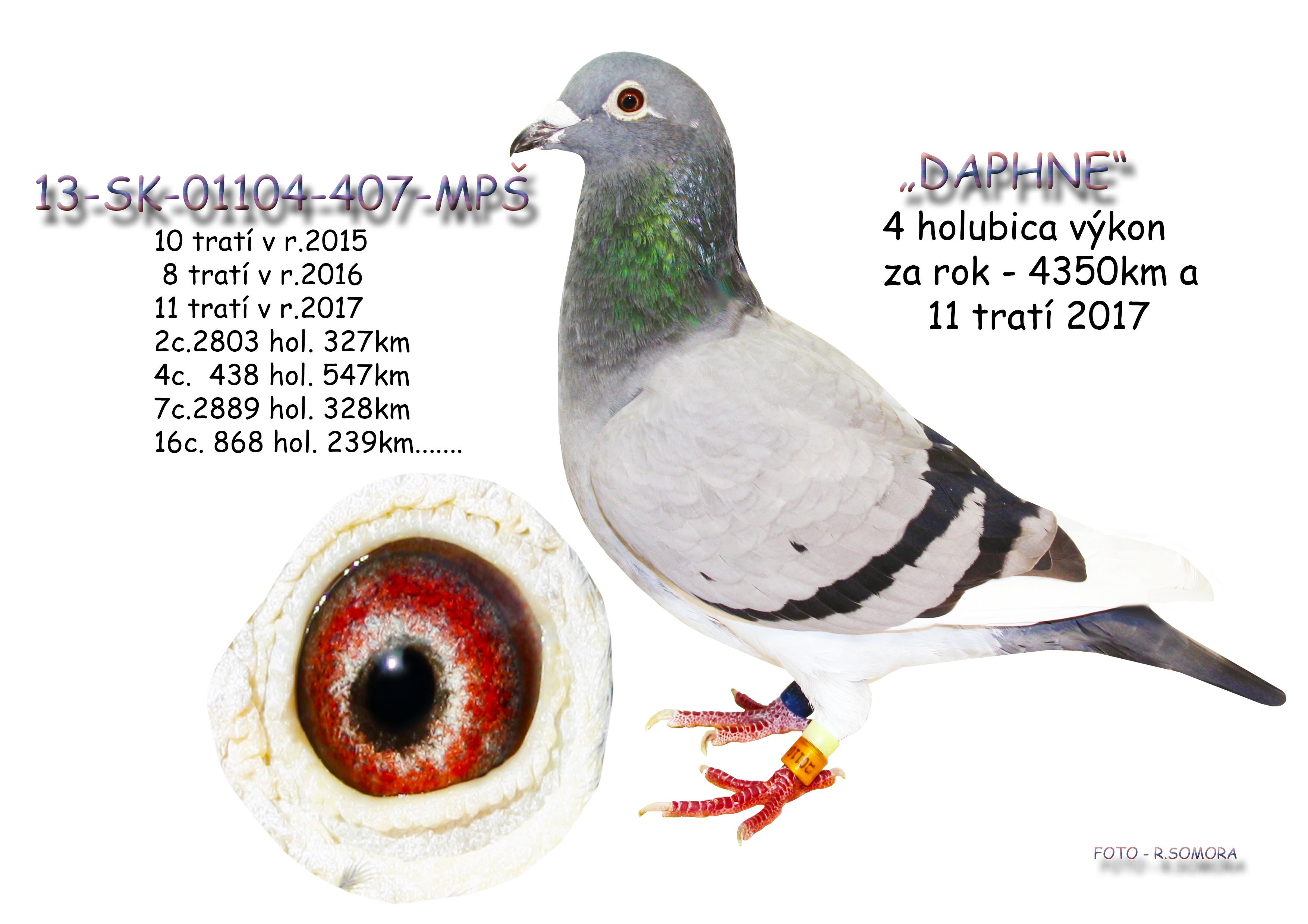 SK-2013-01104-407 - Somora Jozef+Rudolf
