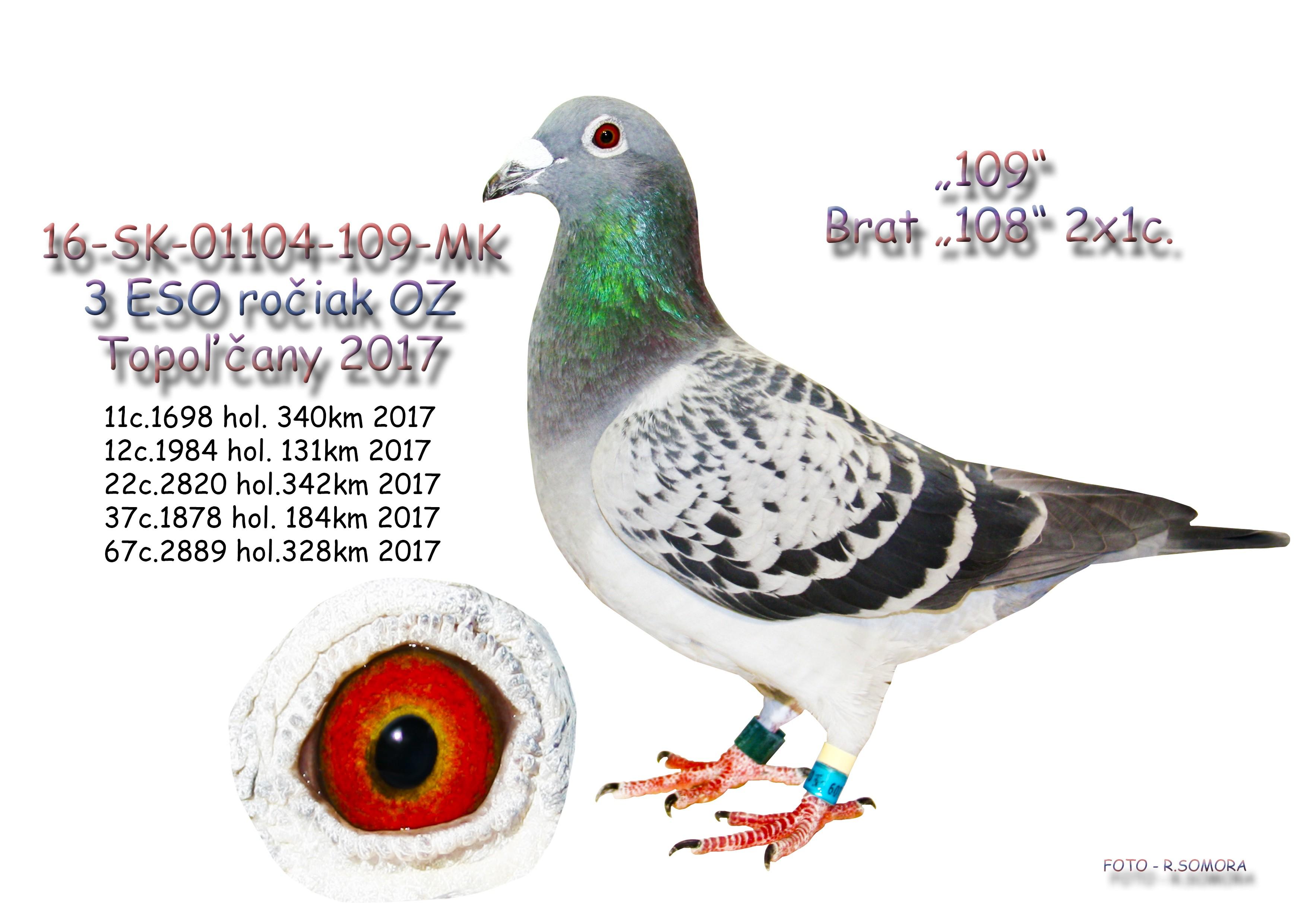 SK-2016-01104-109 - Somora Jozef+Rudolf