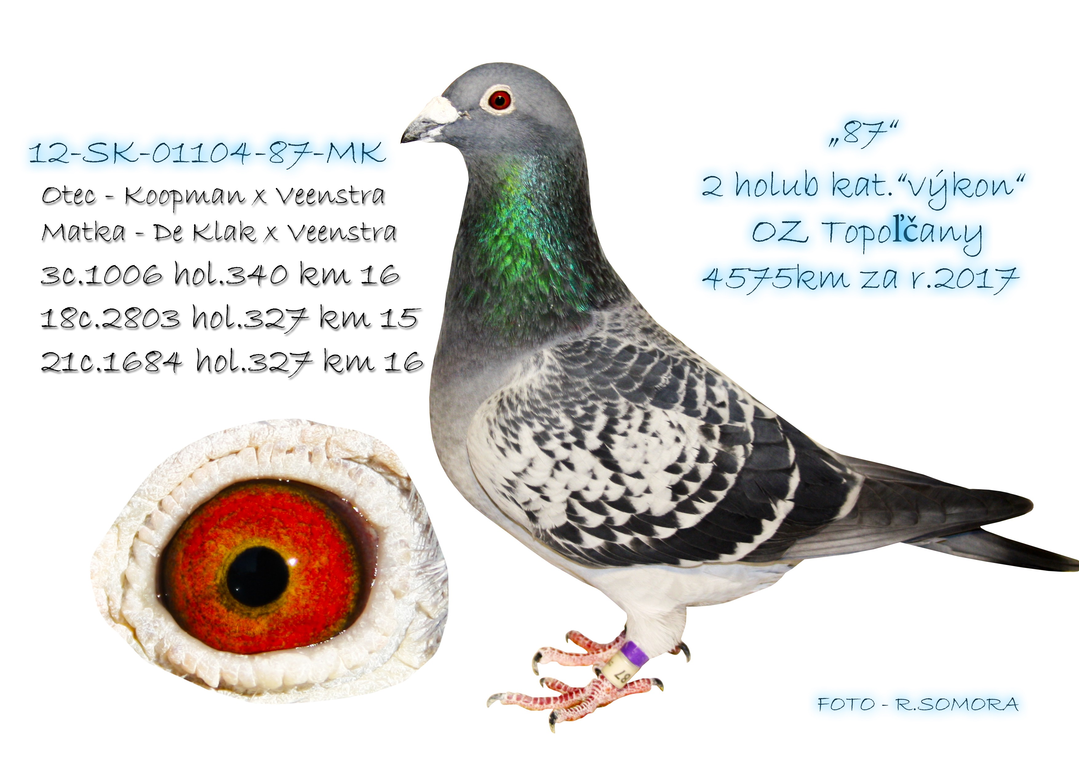 SK-2012-01104-87 - Somora Jozef+Rudolf