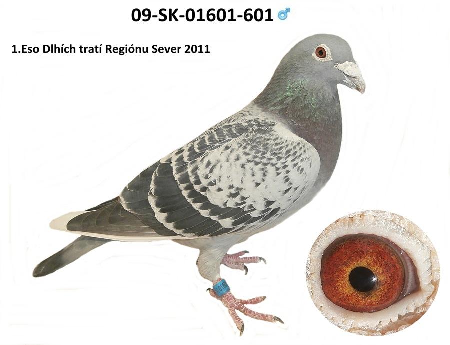 SK-2009-01601-601 - Varmus M + J