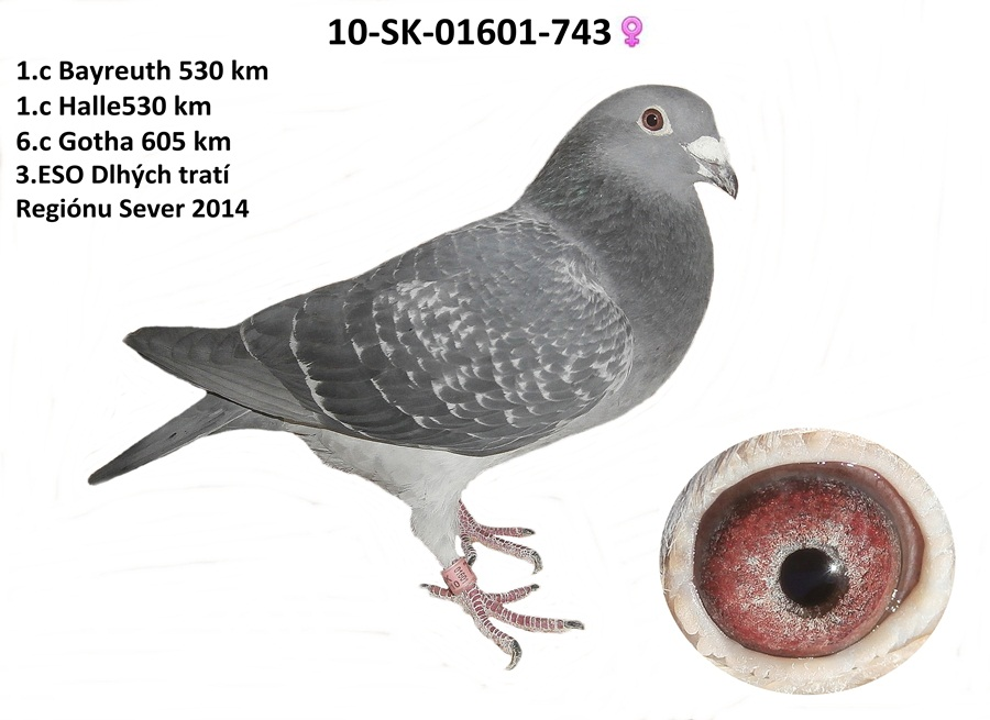 SK-2010-01601-743 - Varmus M + J