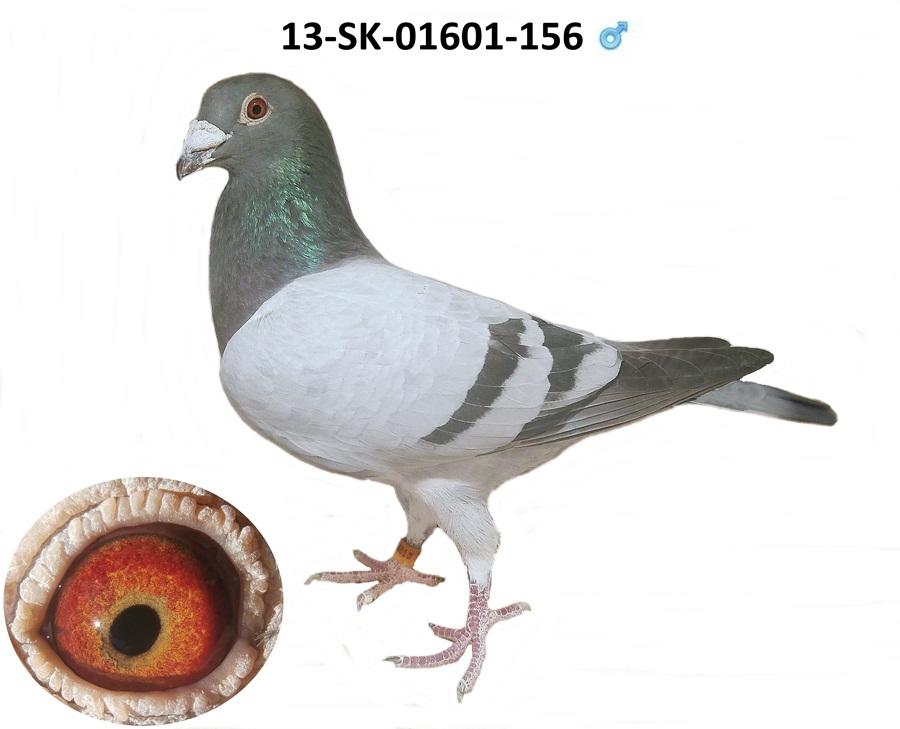 SK-2013-01601-156 - Varmus M + J