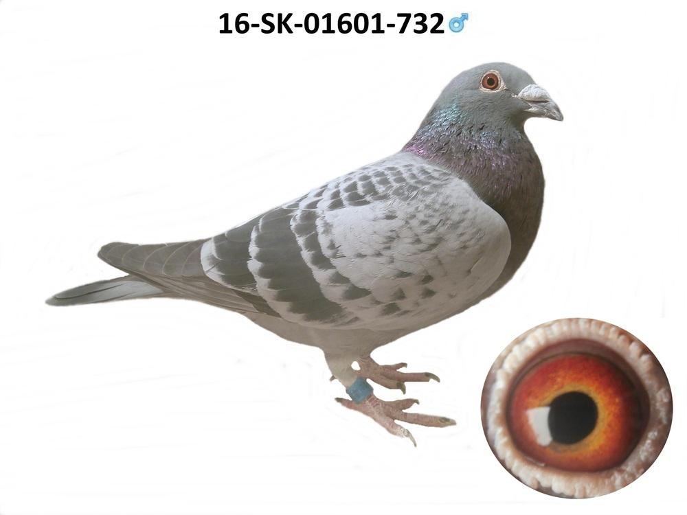 SK-2016-01601-732 - Varmus M + J