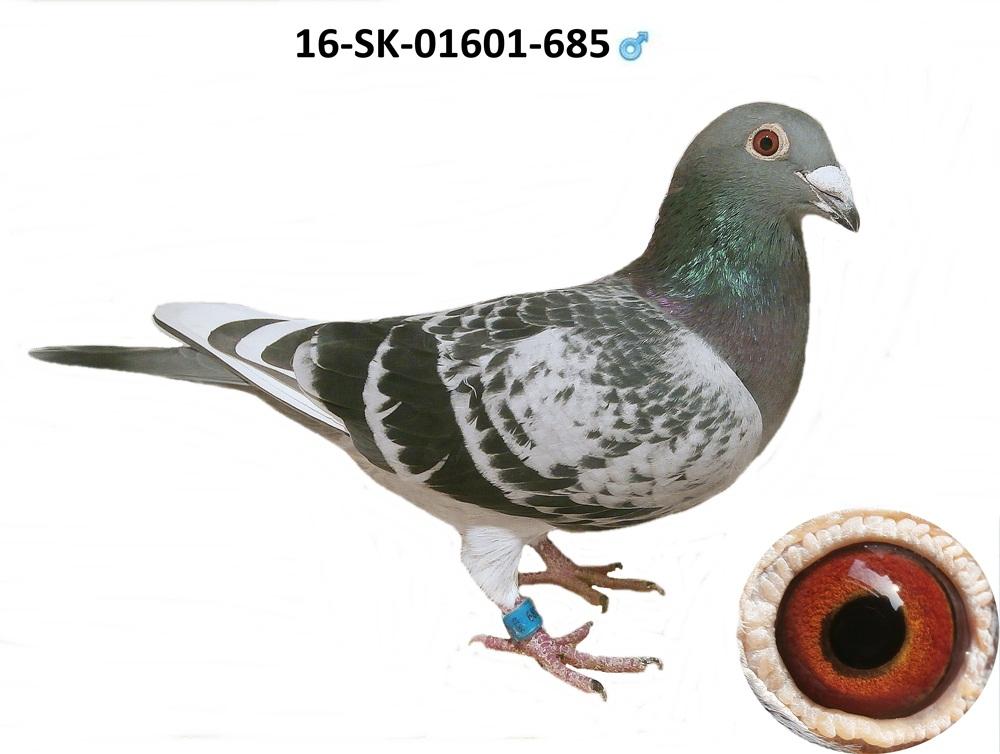 SK-2016-01601-685 - Varmus M + J