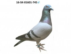 SK-2016-01601-745 - Varmus M + J
