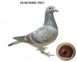 SK-2016-01601-755 - Varmus M + J