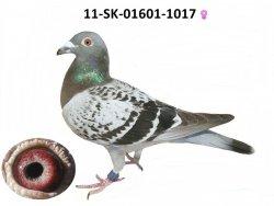 SK-2011-01601-1017 - Varmus M + J
