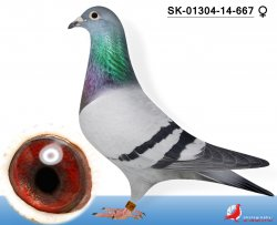 SK-2014-01304-667