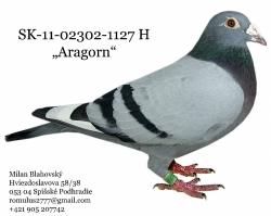 SK-2011-02302-1127