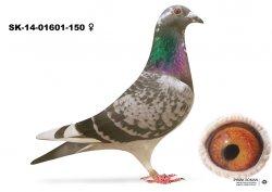 SK-2014-01601-150 - Varmus M + J