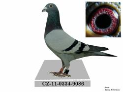 CZ-2011-0334-9086 - Alojz Barbírik