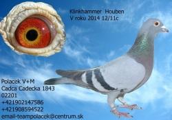 SK-2012-01603-346 - Polacek V+M