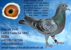 SK-2011-01603-563 - Polacek V+M