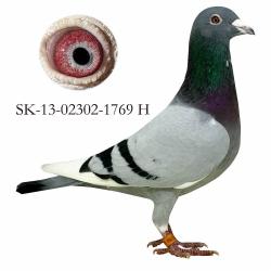 SK-2013-02302-1769