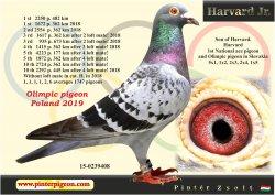 HU-2015-02-39408 - Pintér Zsolt