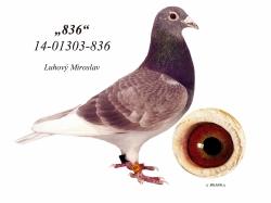 SK-2014-01303-836 - Luhový Miroslav