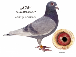 SK-2014-01303-824 - Luhový Miroslav