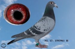 NL-2013-1593961 - Žilka Adrián