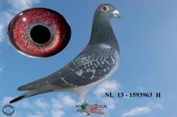 NL-2013-1593963 - Žilka Adrián