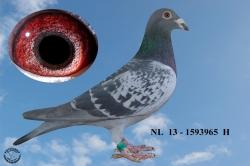 NL-2013-1593965 - Žilka Adrián