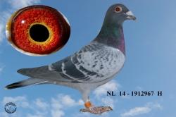 NL-2014-1912967 - Žilka Adrián