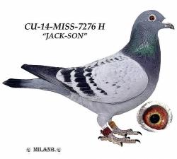 CU-2014-MISS-7276 - Blahovský Milan +Dávid