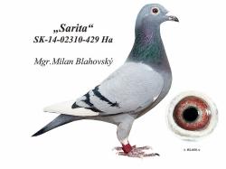 SK-2014-02310-429 - Blahovský Milan +Dávid