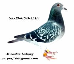 SK-2013-01303-51 - Luhový Miroslav