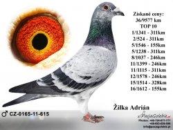 CZ-2011-0165-615 - Žilka Adrián