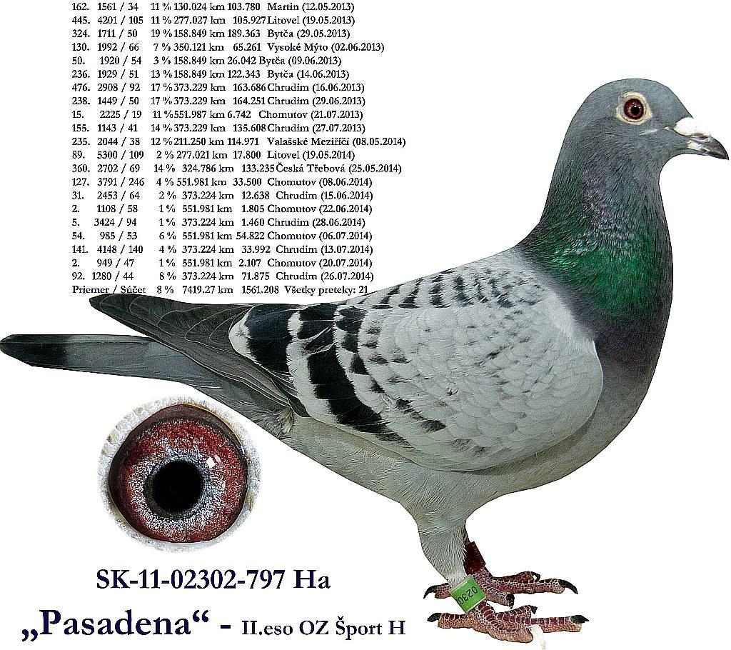 SK-2011-02302-797