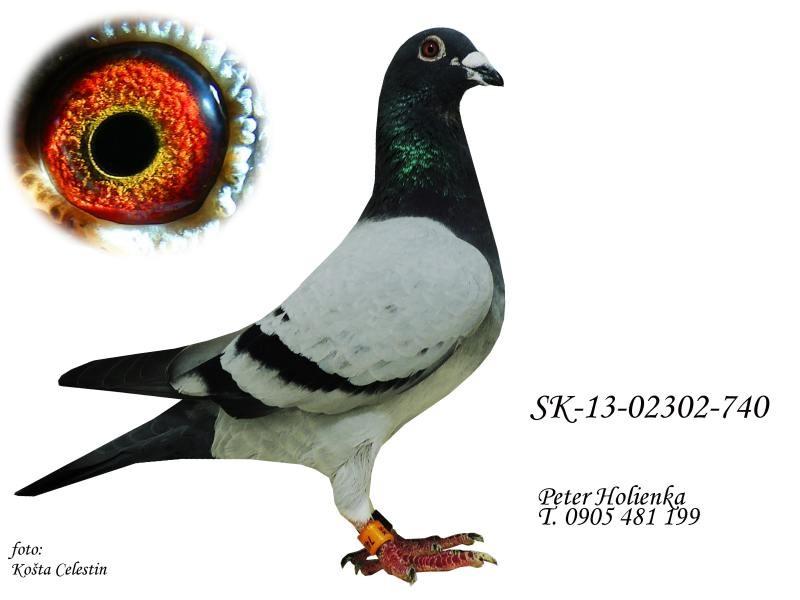 SK-2013-02302-740