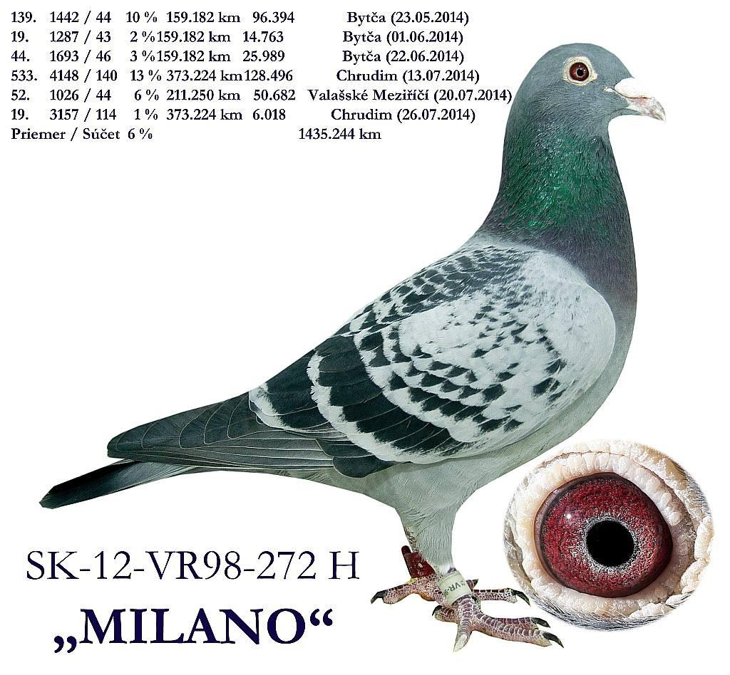 SK-2012-VR98-272