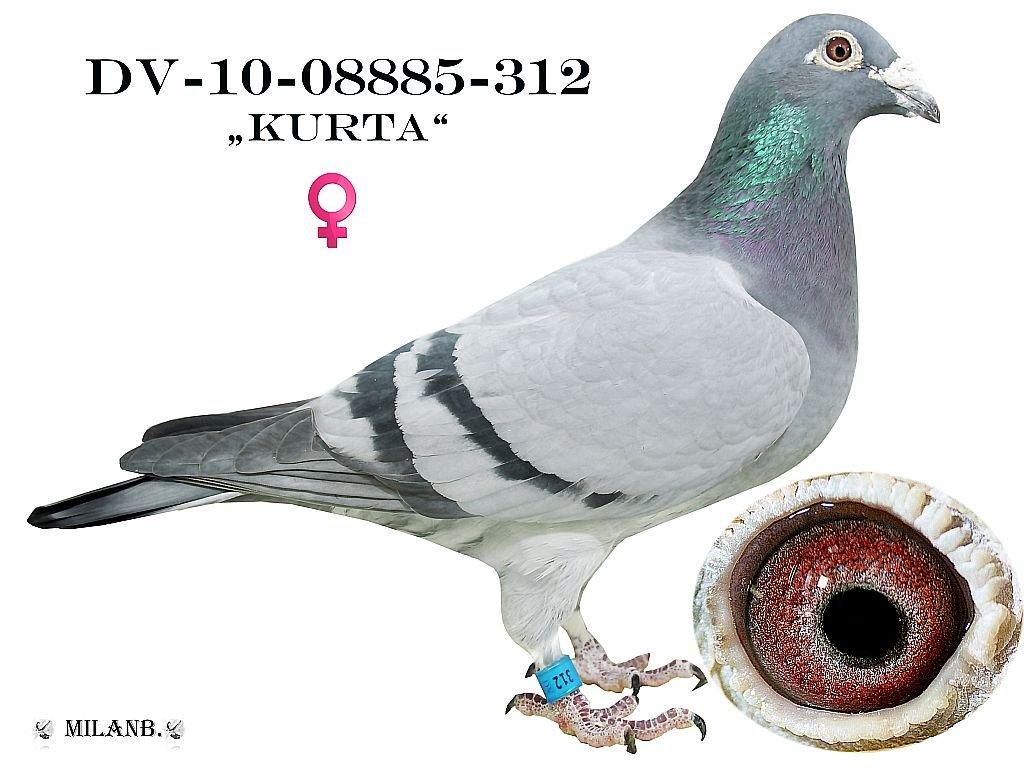 DV-2010-08885-312