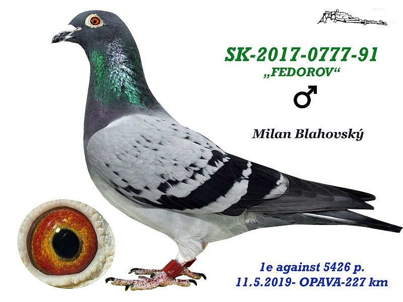 SK-2017-0777-91