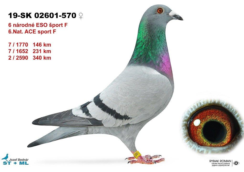 SK-2019-02601-570