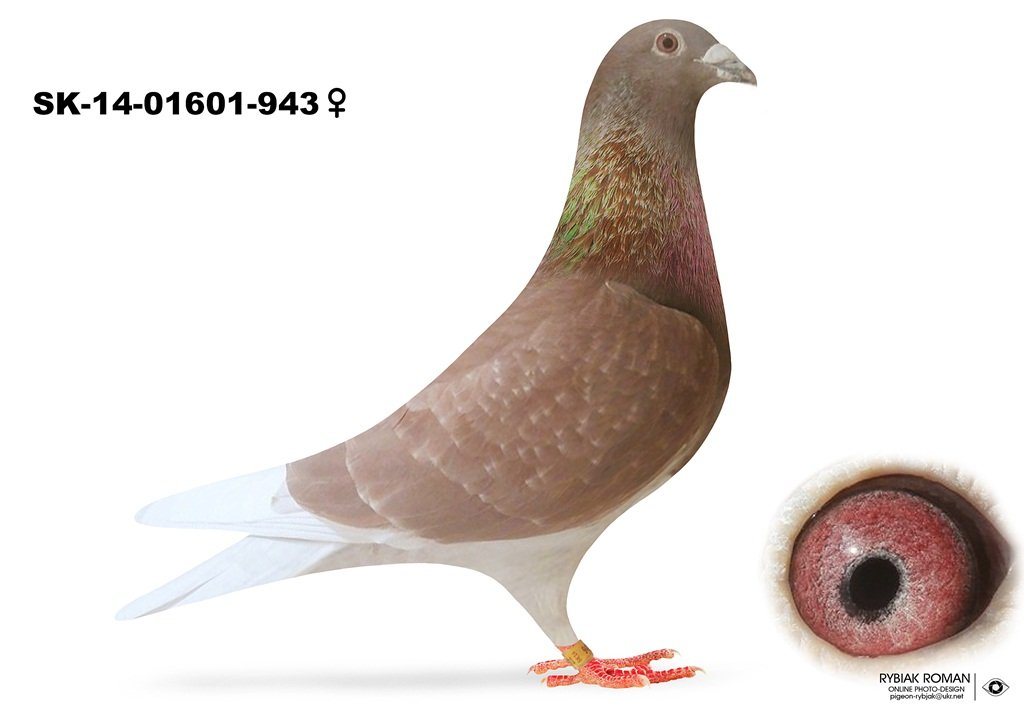 SK-2014-01601-943