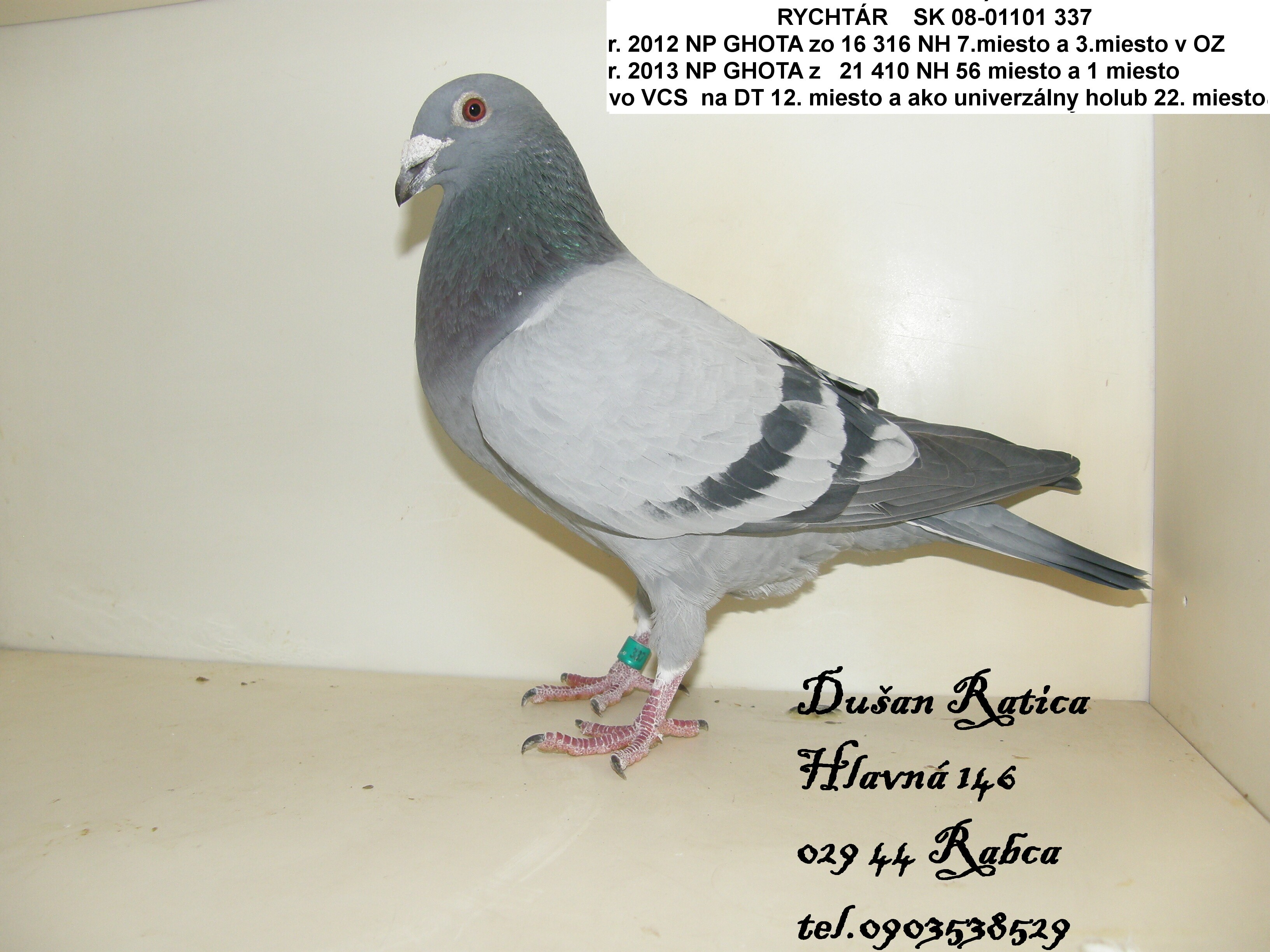 SK-2008-01301-337