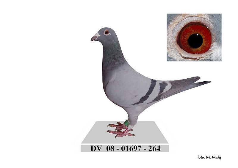 DV-2008-01697-264