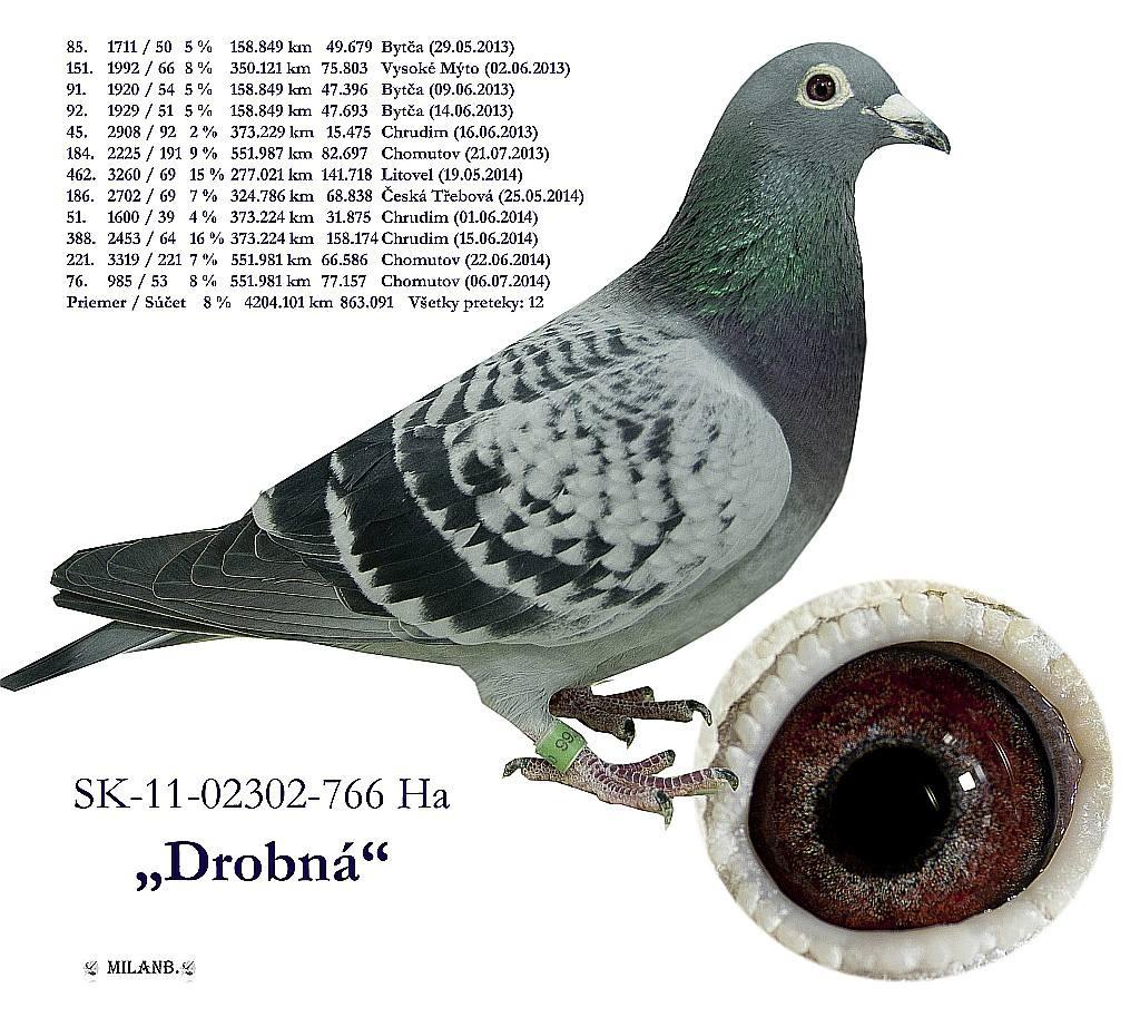 SK-2011-02302-766