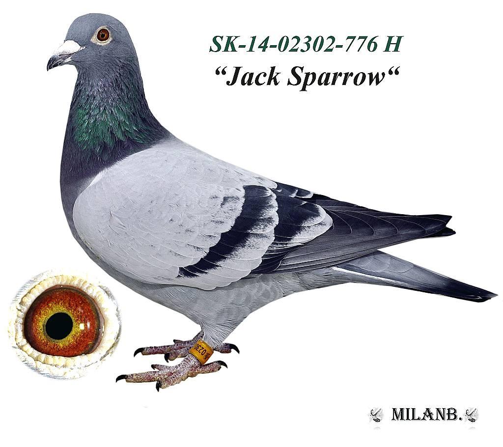 SK-2014-02302-776