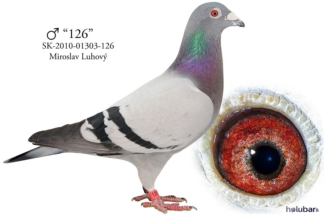 SK-2010-01303-126