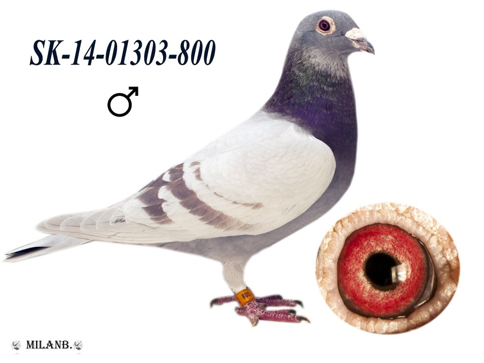 SK-2014-01303-800
